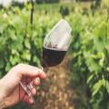 Hoe moet je wijn bewaren?